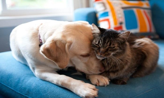آیا حیوانات خانگی می توانند موجب گسترش کروناویروس جدید شوند؟